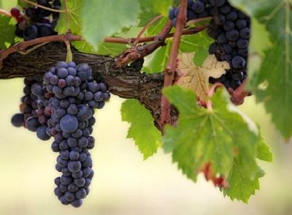 Vino-Immagine Green Style