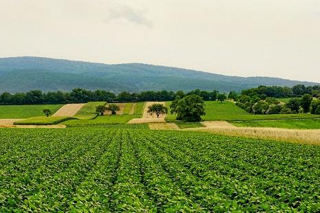 immagine agricoltura