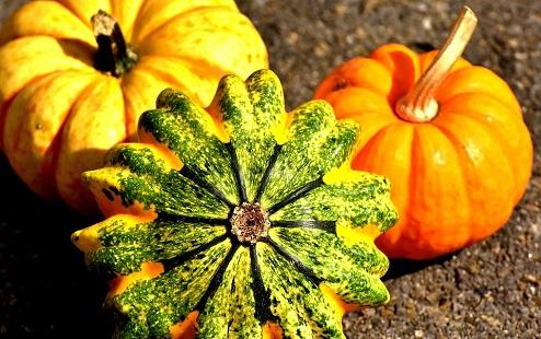 zucca-pumpkins-2204643_960_720